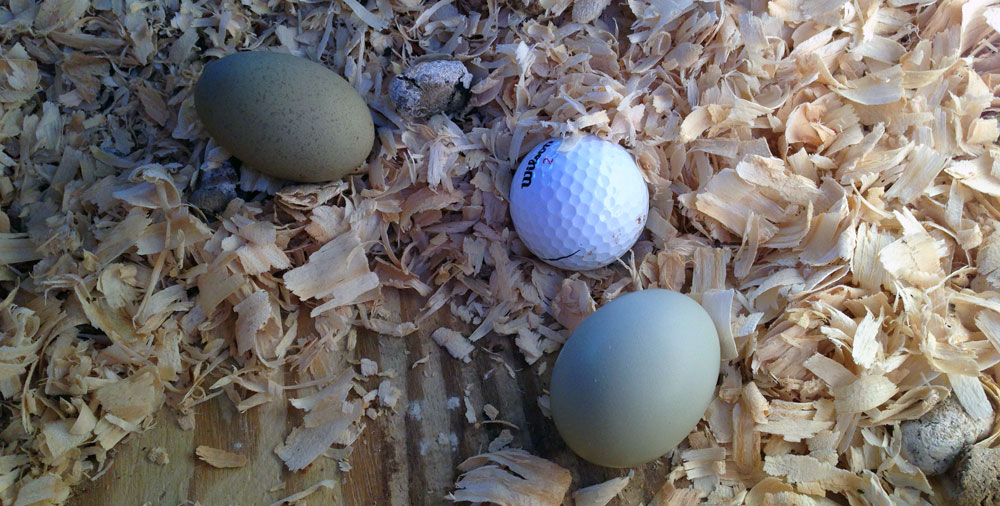 eggs-n-golf-balls