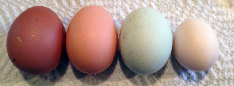 egg-sizes