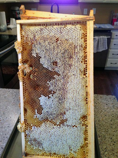 honey-stand