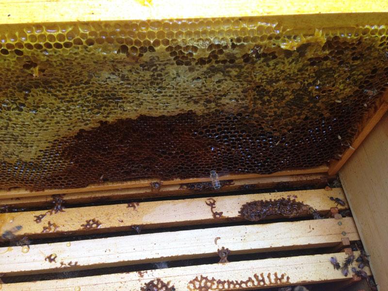 empty-hive