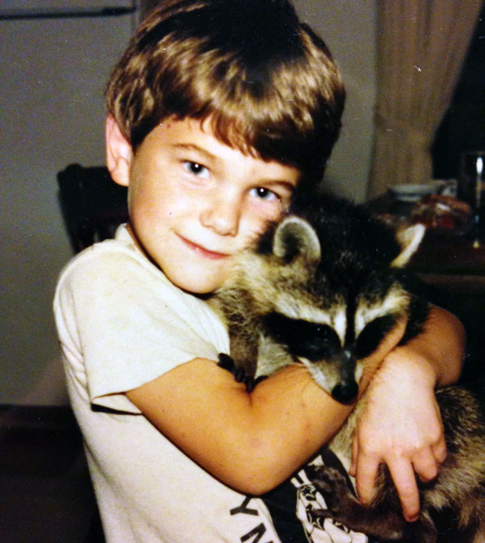 raccoon-david2
