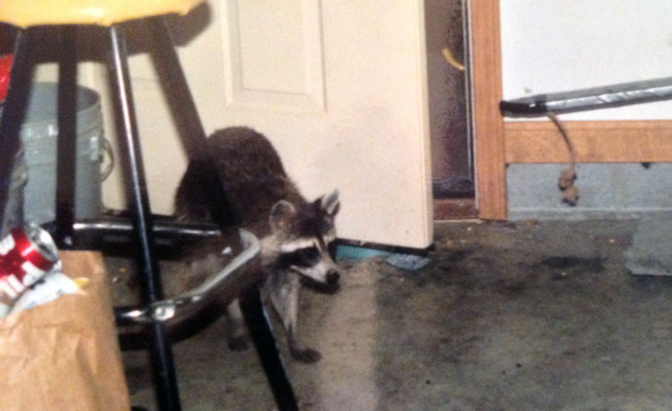 raccoon-garage